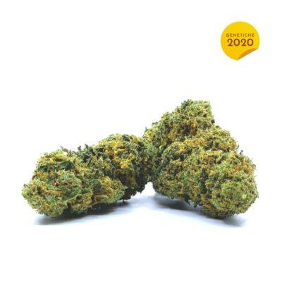 Cookies CBD 2020